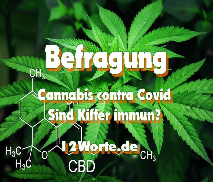 Cannabis contra Covid - Sind alle Kiffer immun?